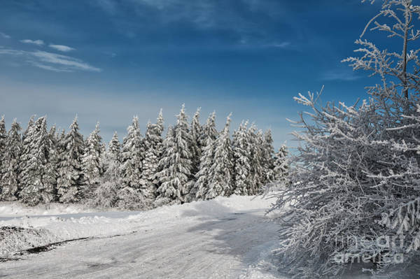Photograph - Snowy Country Lane by Lois Bryan