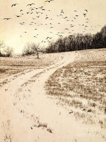 Back Road Photograph - Snowy Country Road by Edward Fielding