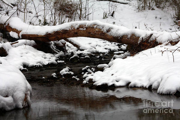 Photograph - Snowy Day By The Riverside by Gena Weiser