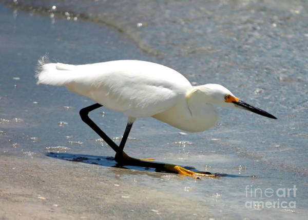 Photograph - Snowy Egret In The Surf by Carol Groenen
