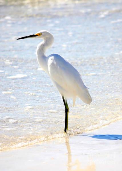 Snowy Egret Photograph - Egret On The Beach by Carol Groenen