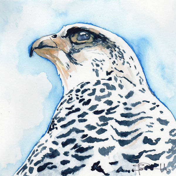 Painting - Snowy Falcon by Sean Parnell