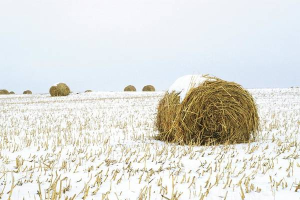Hay Bale Wall Art - Photograph - Snowy Field by Jim Reed Photography/science Photo Library