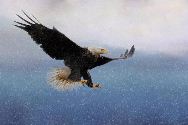 Photograph - Snowy Flight by Jai Johnson