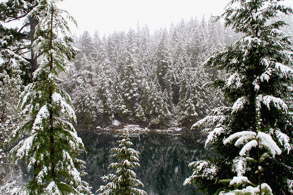 Photograph - Snowy Forest By The Ocean by Peggy Collins