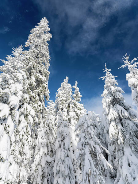 Wald Wall Art - Photograph - Snowy Forest In The National Park by Martin Zwick