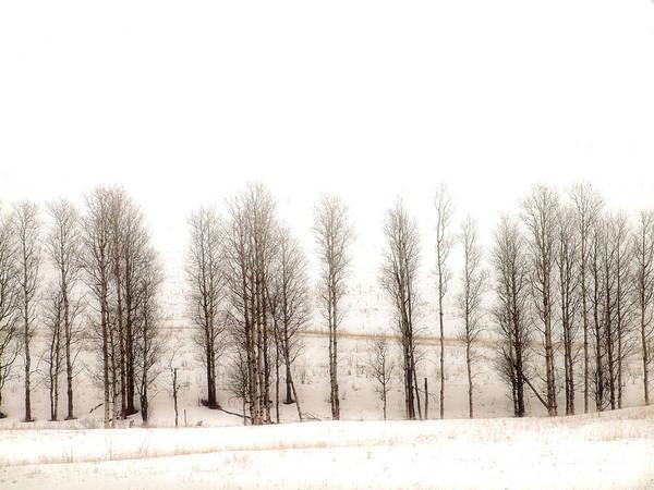Photograph - Snowy Hill by Tara Turner