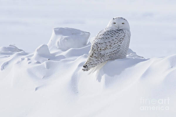 Photograph - Snowy On A Snowbank by Larry Ricker