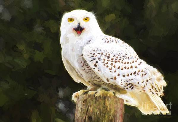 Photograph - Snowy Owl by Les Palenik