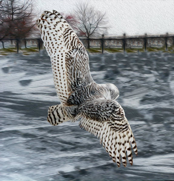 Owl In Flight Photograph - Snowy Owl Wingspan by Tracy Winter