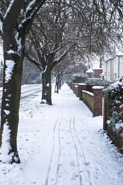 Park Avenue Photograph - Snowy Path by Tom Gowanlock