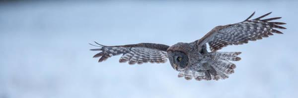 Photograph - Snowy Plummet  by Kevin  Dietrich