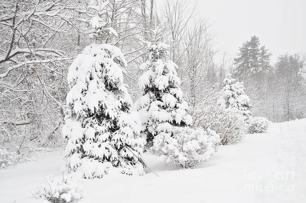 Photograph - Snowy Snow Storm by Staci Bigelow