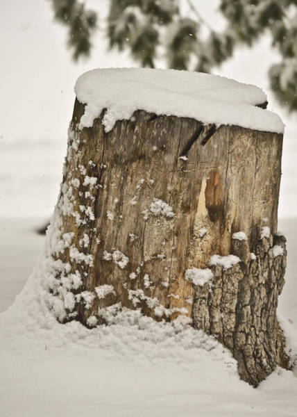 Mixed Media - Snowy Stumptown by Trish Tritz