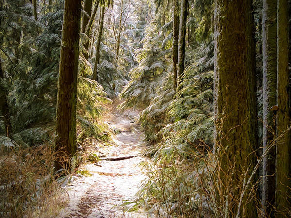 Photograph - Snowy Trail by Mary Jo Allen