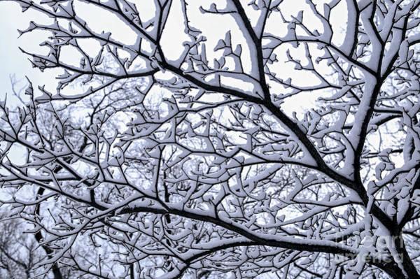 Wall Art - Photograph - Snowy Tree by Elena Elisseeva