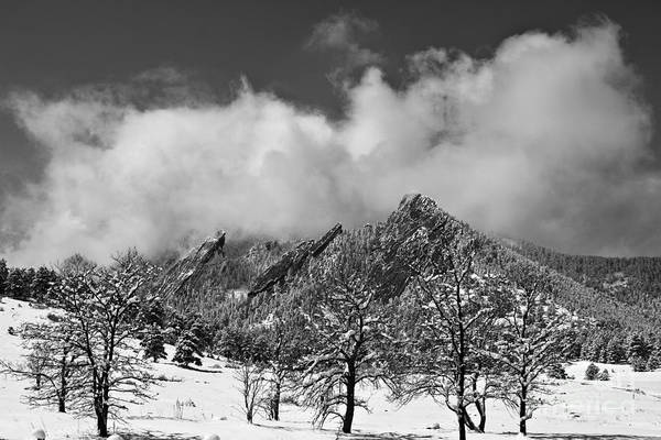 Photograph - Snowy Trees And The Flatirons Boulder Colorado Black And White by James BO Insogna