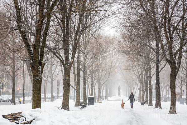 Photograph - Snowy Walk by Susan Cole Kelly