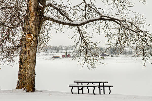 Photograph - Snowy Winter Country Cottonwood Tree Landscape View by James BO Insogna