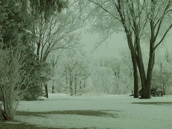 Photograph - Snowy Winter Frost by Mary Wolf