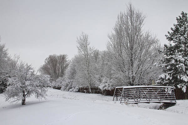 Photograph - Snowy Winter Landscape View  by James BO Insogna