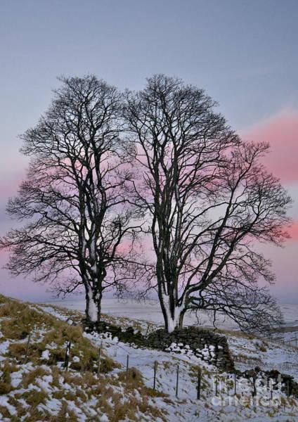 Snowy Winter Treescape Art Print