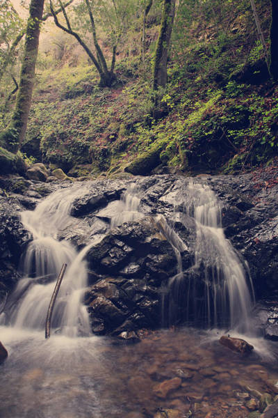 Shutter Speed Photograph - So Easy To Fall by Laurie Search