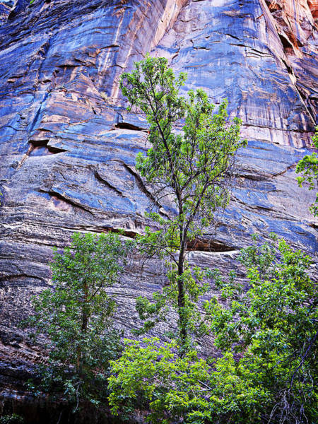 Wall Art - Photograph - Purple Cliff And Tree At Zion by Marilyn Hunt