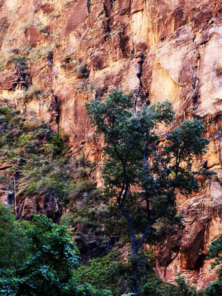 Wall Art - Photograph - So Zion by Marilyn Hunt