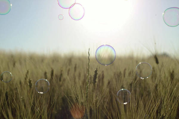 Bubble Photograph - Soap Bubbles Floating Above Wheat by Ilarialuciani