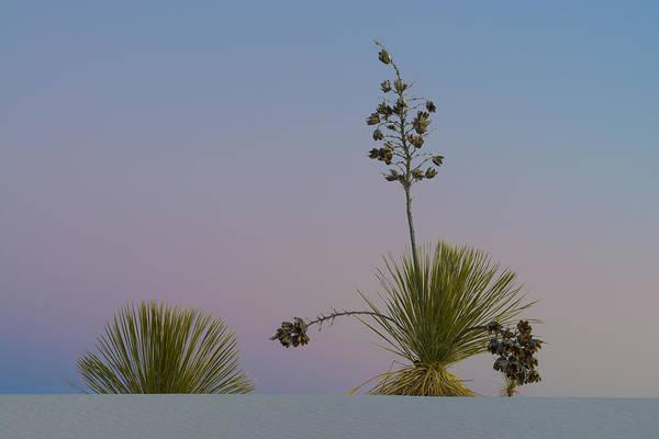 Yucca Elata Wall Art - Photograph - Soaptree Yucca And Twilight Sky, Nm by John Shaw
