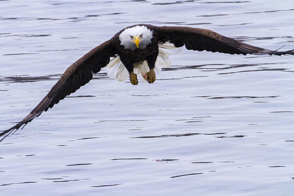 Photograph - Soar by Jack R Perry