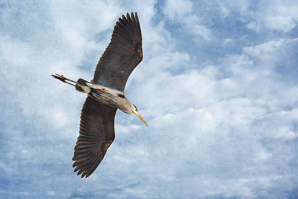 Photograph - Soaring by Dale Kincaid