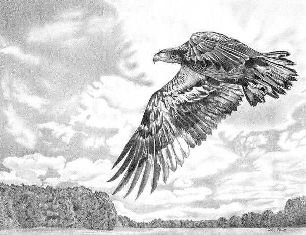 Drawing - Soaring Eagle by Dustin Miller