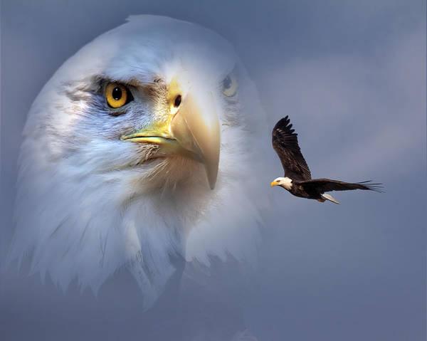 Digital Art - Soaring Eagle by Mary Almond