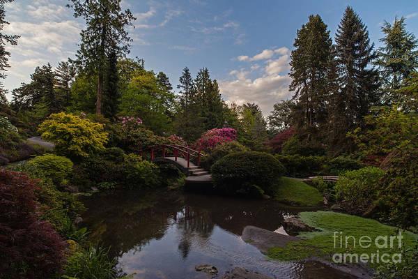 Koi Photograph - Soaring Garden Vistas by Mike Reid