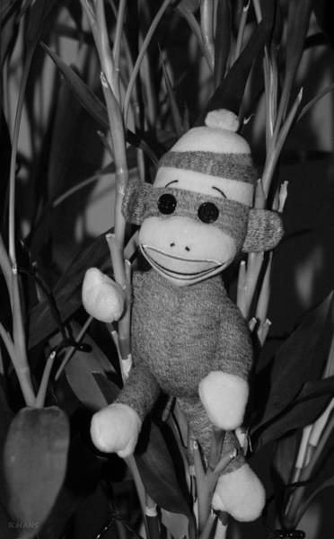Sock Monkey Photograph - Sock Monkey In His Natural Habitat In Black And White by Rob Hans