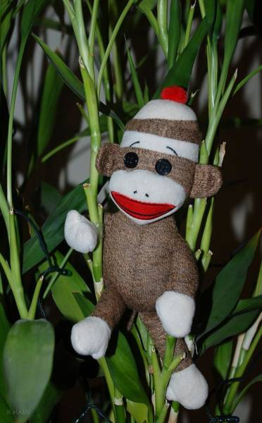 Sock Monkey Photograph - Sock Monkey In His Natural Habitat by Rob Hans