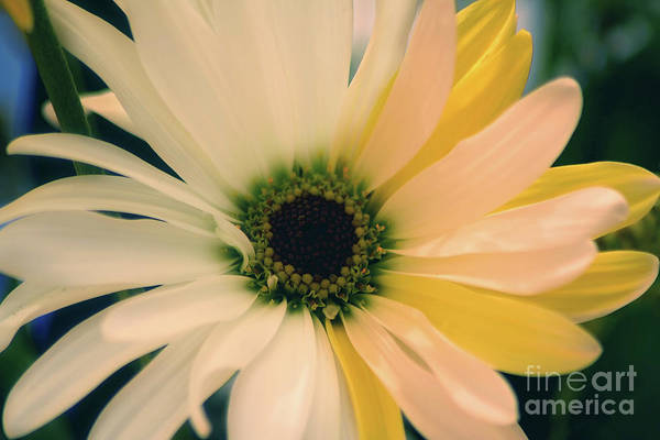 Photograph - Soft by LR Photography
