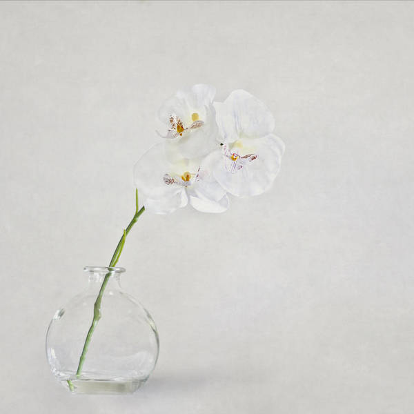 Glass Vase Photograph - Soft As A Whisper by Evelina Kremsdorf