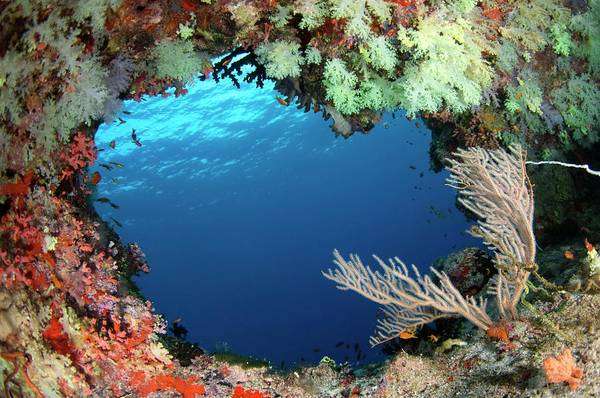 The Maldives Photograph - Soft Corals And Sea Fan by Scubazoo/science Photo Library