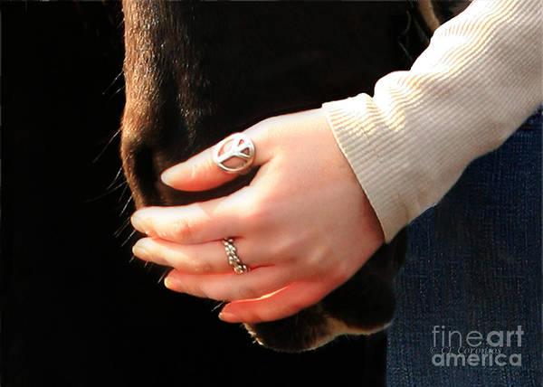 Photograph - Soft Hand Soft Nose by Carol Lynn Coronios