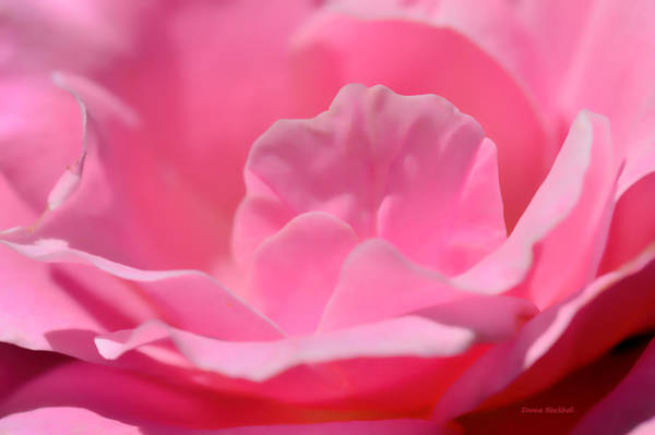 Wall Art - Photograph - Soft Pink Bed by Donna Blackhall