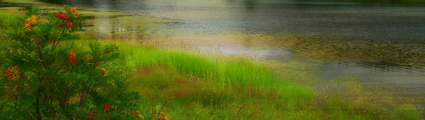 Photograph - Soft Romance - Textured by Marilyn Wilson