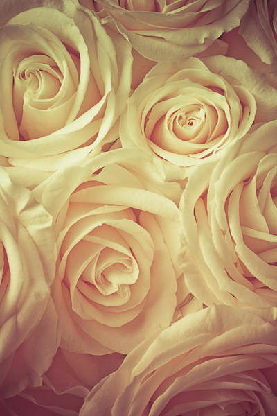Softly Photograph - Soft Rose Light by Garry Gay