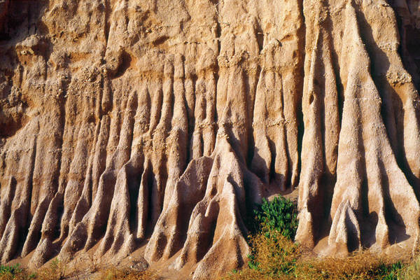 Water Erosion Photograph - Soft Sedimentary Rock Eroded By Flowing Water by Pascal Goetgheluck/science Photo Library