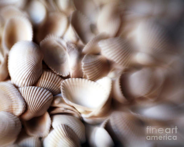 Photograph - Soft Shells by Kate McKenna