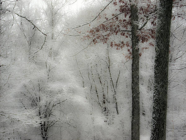 Photograph - Soft Snow by Nancy De Flon