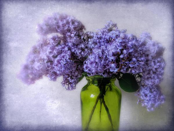 Lilac Photograph - Soft Spoken by Jessica Jenney