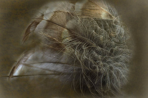 Airy Photograph - Soft Strength by Susan Capuano